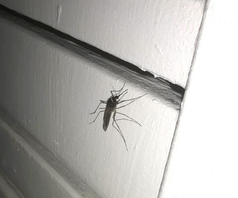 Soyons secs avec les moustiques